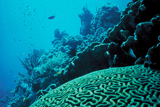 512px-Coral_Reef